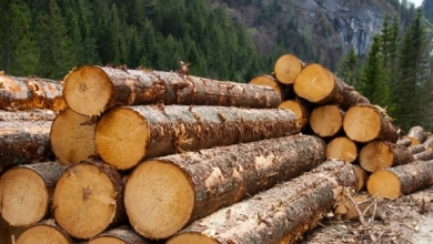 logging-595x335